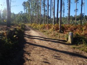 Ein schöner Waldweg - auf dieser Etappe gab es leider zu wenige davon