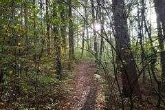 Auf dem Weg zur Burgruine Scharzfels