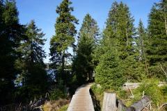 Holzstege am Oderteich
