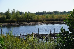 Freistätter Moor